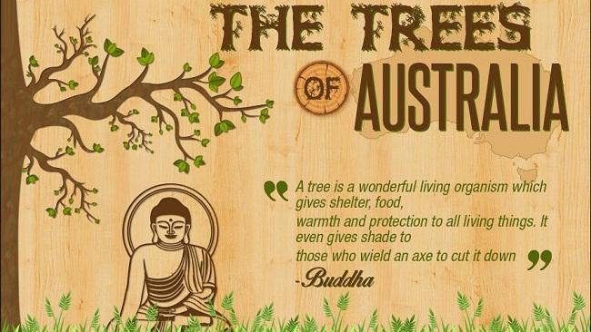The Trees of Australia